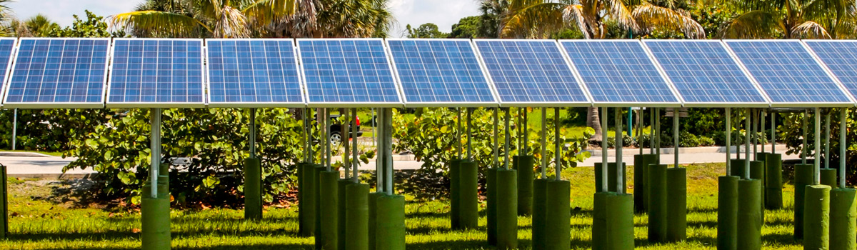 What The Watt: Ten Years Of Solar Growing And Growing Up